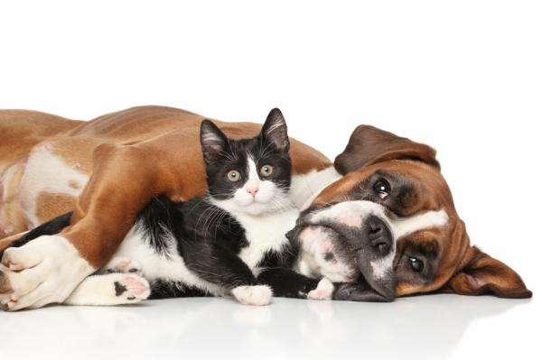 Profesionales «pet-friendly» relanzan una APP para que los animales de compañía estén más y mejor cuidados